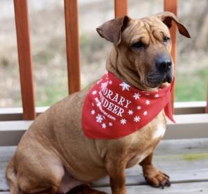 Beeba in Handkerchief from December Pet Treater Box - The Homespun Chics
