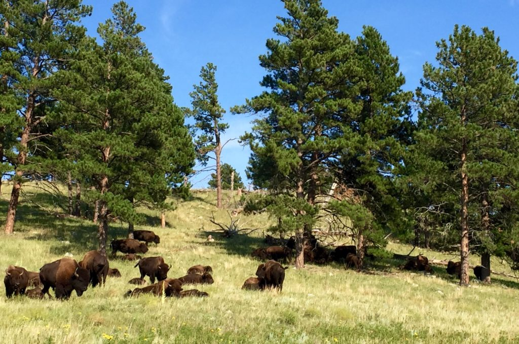 2016-08-29-custer-state-park-sd3