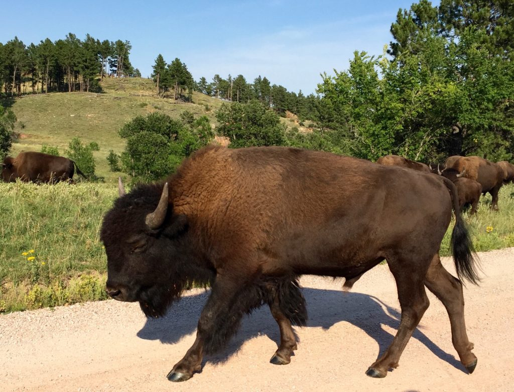 2016-08-29-custer-state-park-sd4
